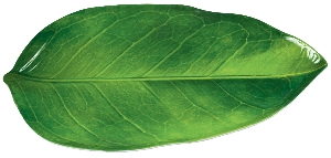 Bandeja shaped:LEAF