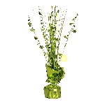 Peso Kiwi Green Spray Centrepiece Balloon s 30cm