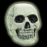 PRECIO OFERTA HALLOWEEN, DTO. NO ACUMULABLE. Cráneo que brilla en la oscuridad - 20cm